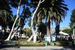 Пуэбла. Деревья на площади Сокало.