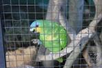 Каракас. Обитатель вольера для попугаев.
