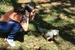 Медельин. Игуана в парке Эксплора