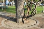 Коррьентес. Стволы деревьев на набережной