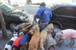 Буэнос-Айрес. Выгульщик собак, типичная профессия в этом городе