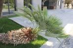 Все знают,как должна выглядеть пальма!
